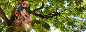 Signs You Need Your Trees Removed in Lansing, Michigan