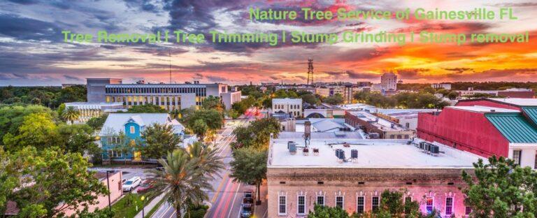 Gainesville tree service