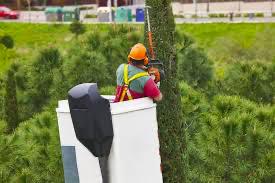 Tree trimming Gainesville